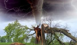 broken tree with tornado behind it